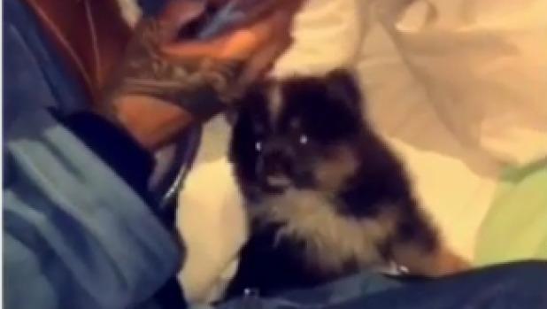 Rihanna con su nueva mascota Pepe